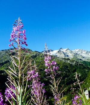Wanderurlaub in der Schweiz