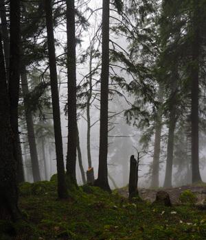 Wanderurlaub in den Wäldern in der Schweiz