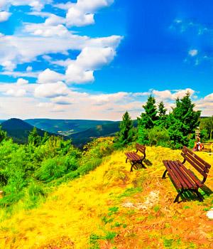 Natur im Thüringer Wald