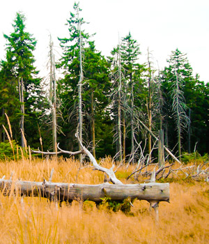 Familienurlaub im Thüringer Wald