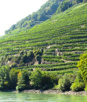 Natur genießen mit einer Pension in Wachau