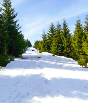 Langlaufurlaub im Harz