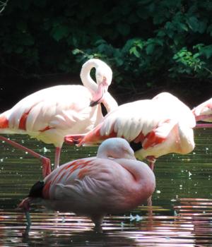 Natur genießen während der Städtereise in Augsburg