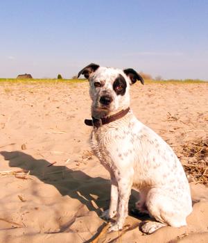 Natur erleben im Urlaub mit Hund in Cuxhaven