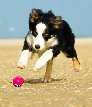Freizeitspaß im Urlaub mit Hund in Nordfriesland