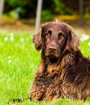 Natur erleben im Urlaub mit Hund in Nordfriesland