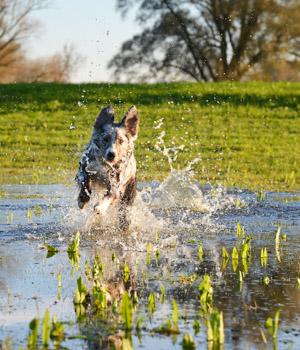 Urlaub mit Hund in Nordfriesland