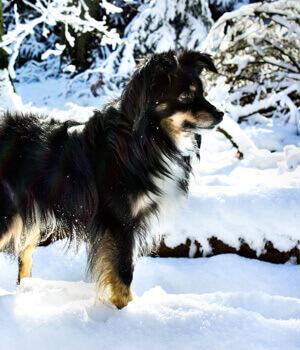 Freizeitspaß im Urlaub mit Hund in Vorarlberg