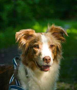 Natur genießen im Urlaub mit Hund im Waldviertel