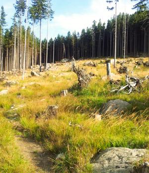 Wanderurlaub in den Wäldern im Harz