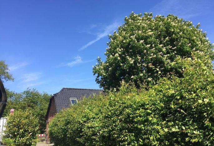 Ferienhaus 'Lotsenhaus' am Fehmarnsund - mit Garten