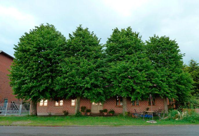 Apfelhof Fehmarn
