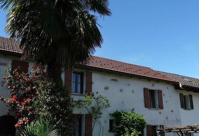 Gartenansicht mit Palme und Traubenpergola