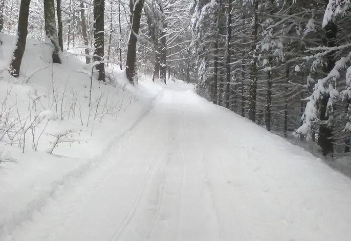 Weg durch das Wald nach dem Haus