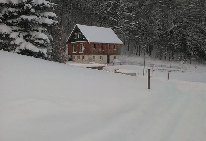 Am Waldrand im Winter