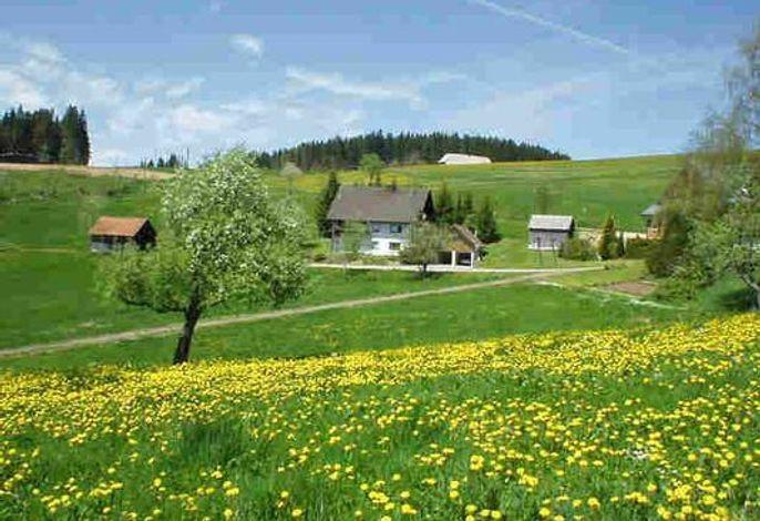 Frühling im Hochschwarzwald. Die Wiesen ums Haus blühen gelb.