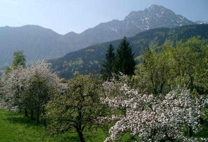 Schöne Aussicht in die Berchtesgadener und Salzburger Alpen