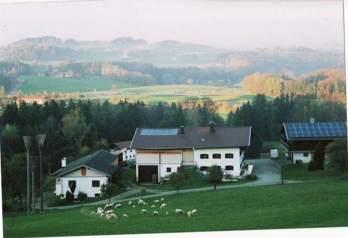 Hausansicht mit Schafe
