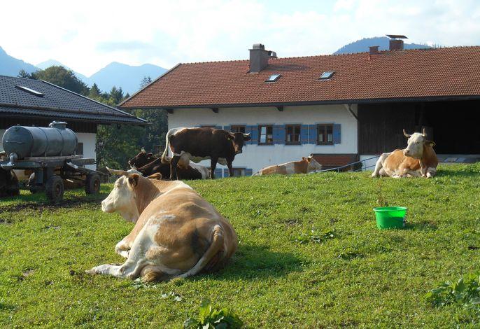 Unsere Tiere am Hof