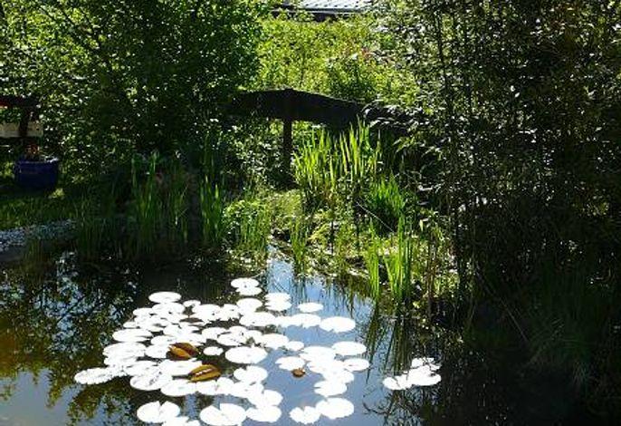 der Garten mit Teich