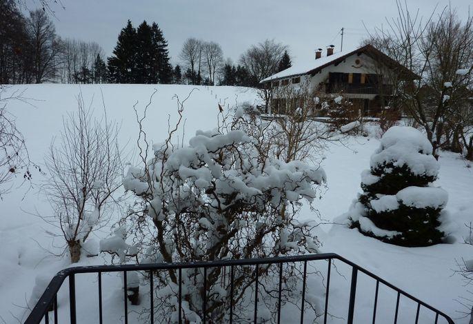 Blick vom Eingang auf den Buchwald mit Nachbarhaus.