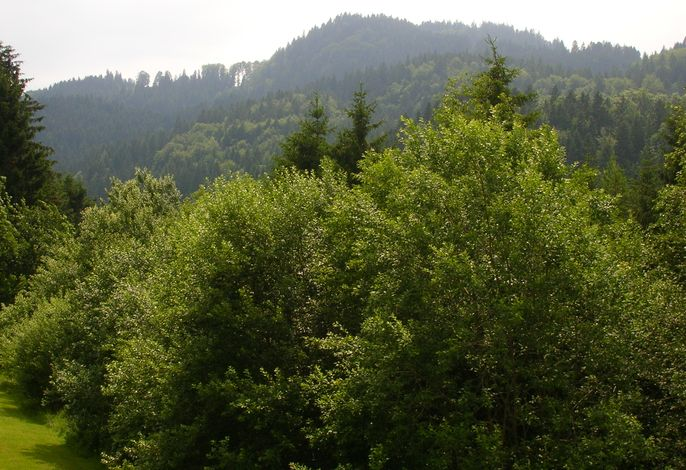 ciao-aschau Sachrang-Grenzhub FeWo 312 Göke