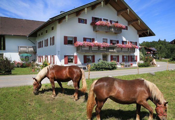Der Heutauer Hof mit seinen Pferden