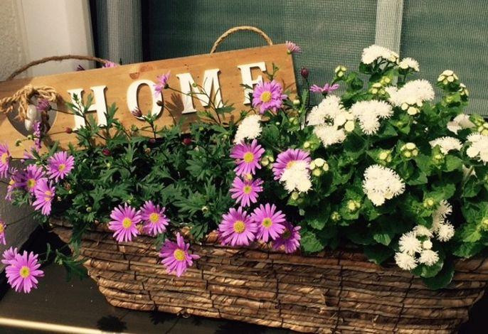 Herzlich Willkommen in der Ferienwohnung Alina