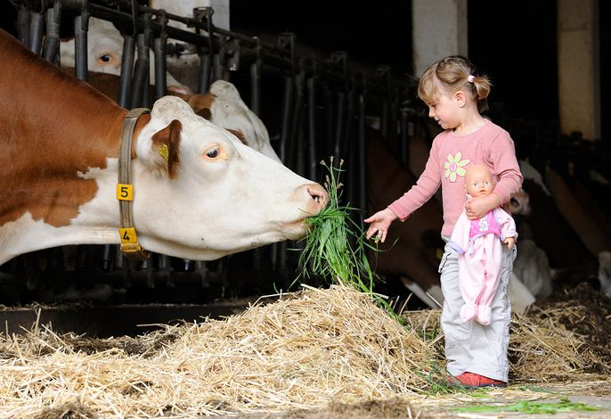 Kind füttert Kuh, Erlebnis Bauernhof, Bauernhofurlaub Bayern