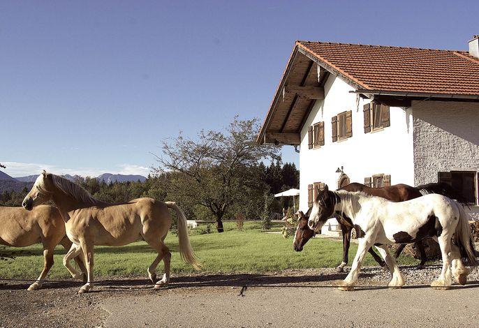 Pferde am Huberhof