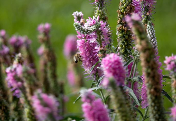 Herrliche Blumenvielfalt für Bienen und unserem Wohlgefühl