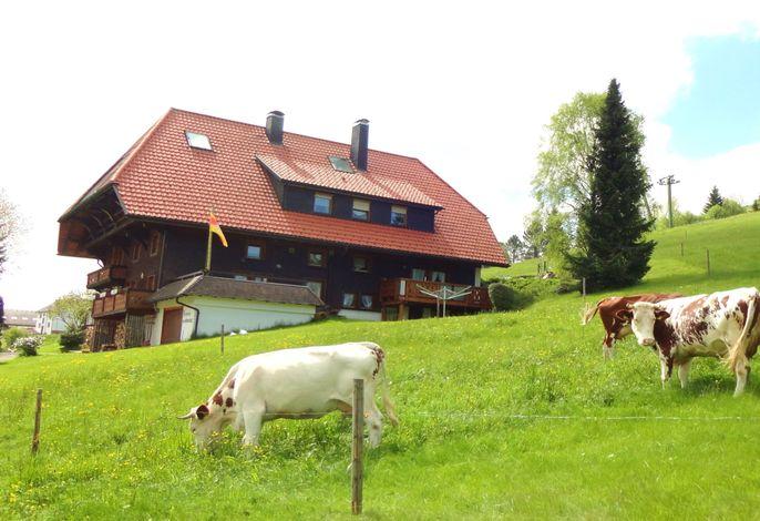 Haus und Weide