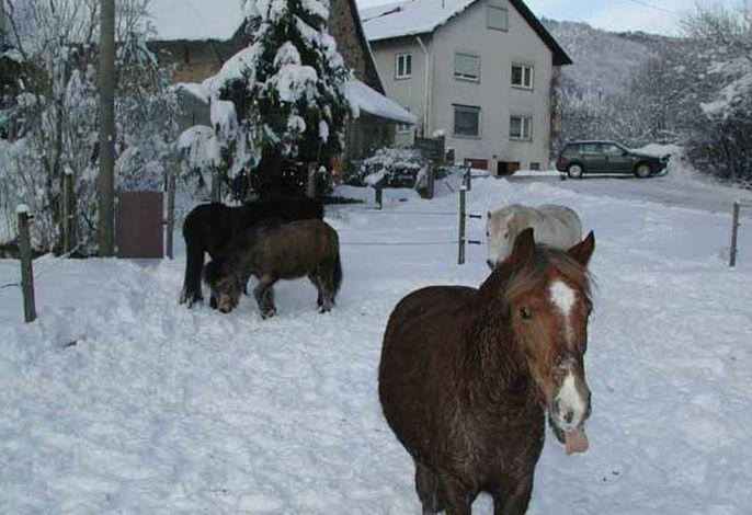 PensionSchneider_Pferde.jpg