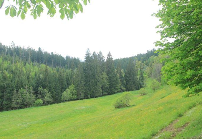 das Naturschutzgebiet Zinsbachtal