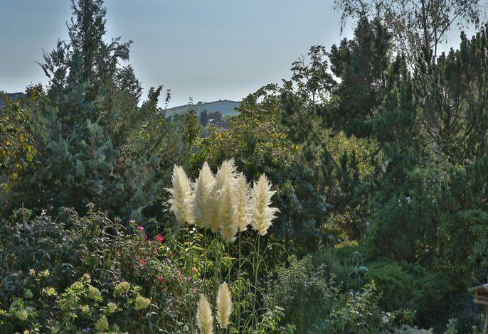 Blick nach Südwesten in den Garten