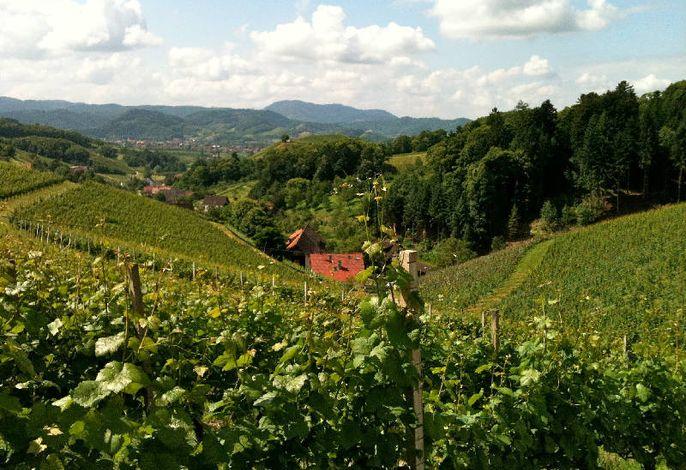Blick vom Weinberg ins Tal