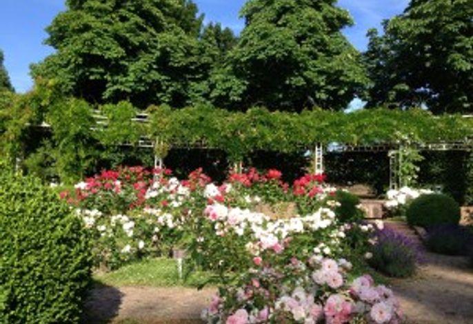 Rosengarten / Seepark