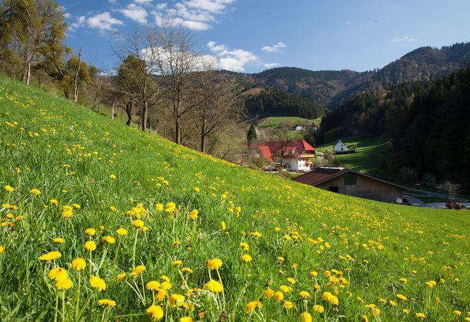Blick über die Frühlingswiese