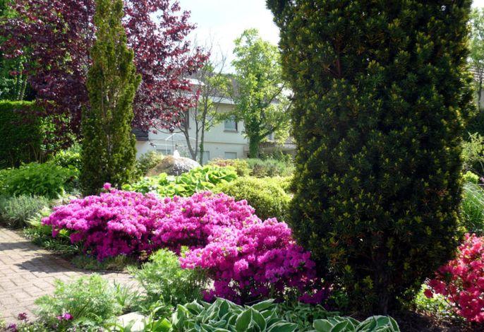 Garten Azalee