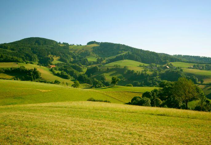 Horben ist geprägt von Wiesen und Wäldern.