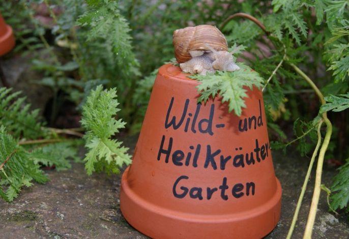 Wild- und Heilkräuter-Garten