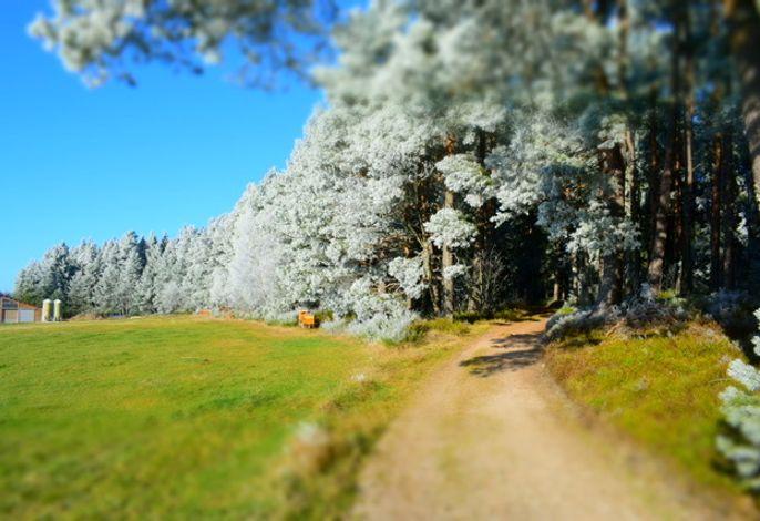 An unserem Wald