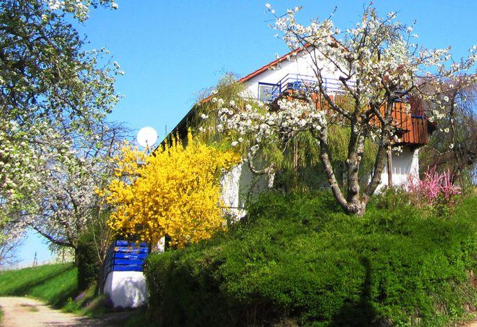 Haus Honigschlecker im Frühling