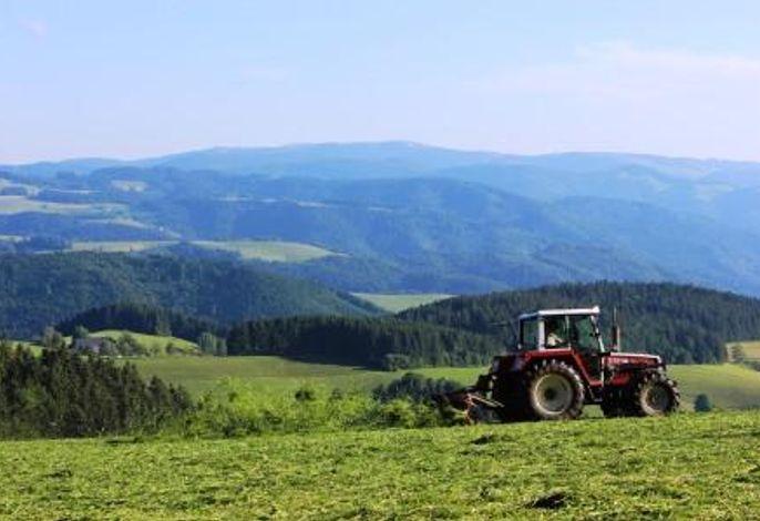 Bauer Matthias bei der Ernte