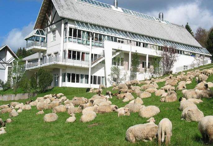 Außenansicht mit Schafen zu Besuch