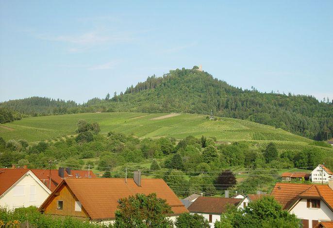 Yburg - Weinberge