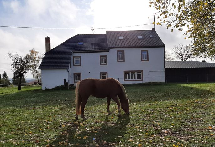 Ferienhaus mit einer Pferdewiede direkt am Haus
