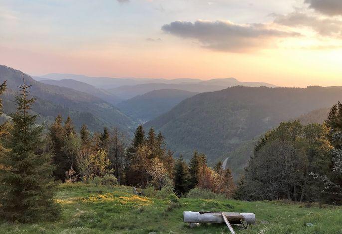 Ferienwohnung Feldberg Schwarzwaldnest