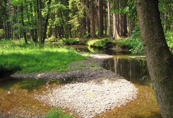 Wald - Ferienhaus Pöttgen