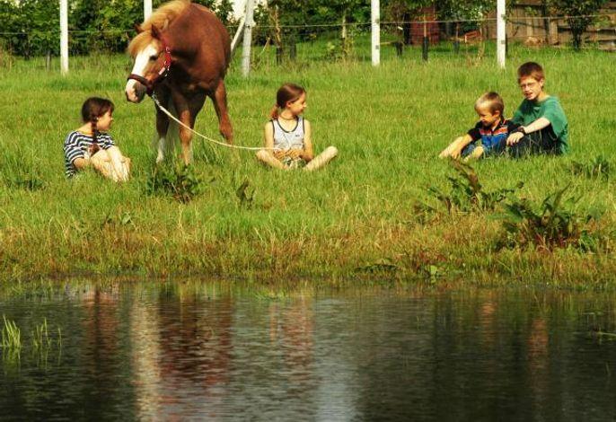 Hauseigene Pferde